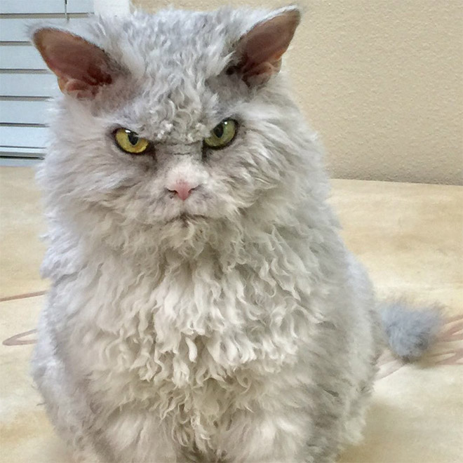 Angry cat is angry.