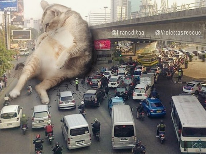 Giant cat blocking the traffic.
