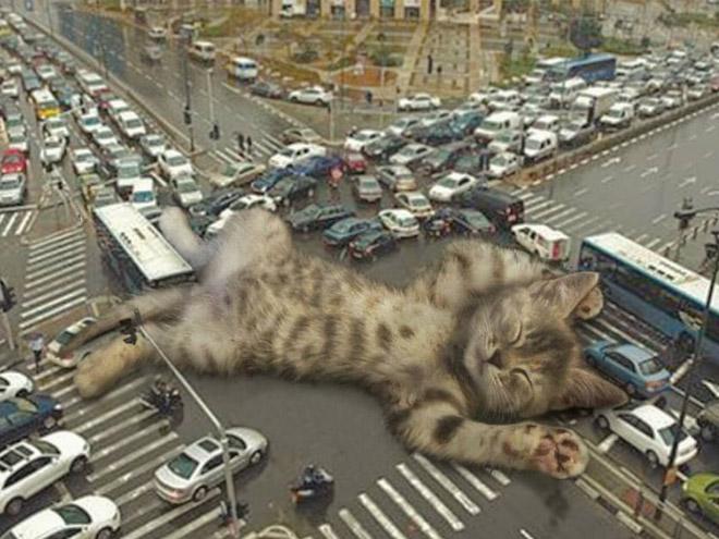 Huge kitten blocking the traffic.
