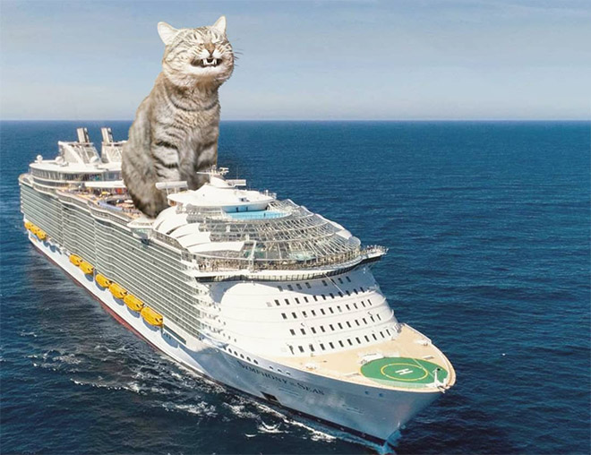 Huge cat on a cruise.