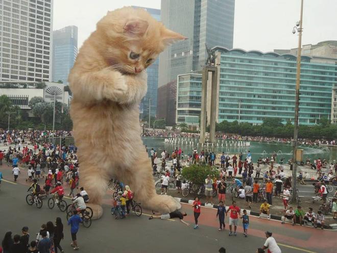 Godzilla kitten.