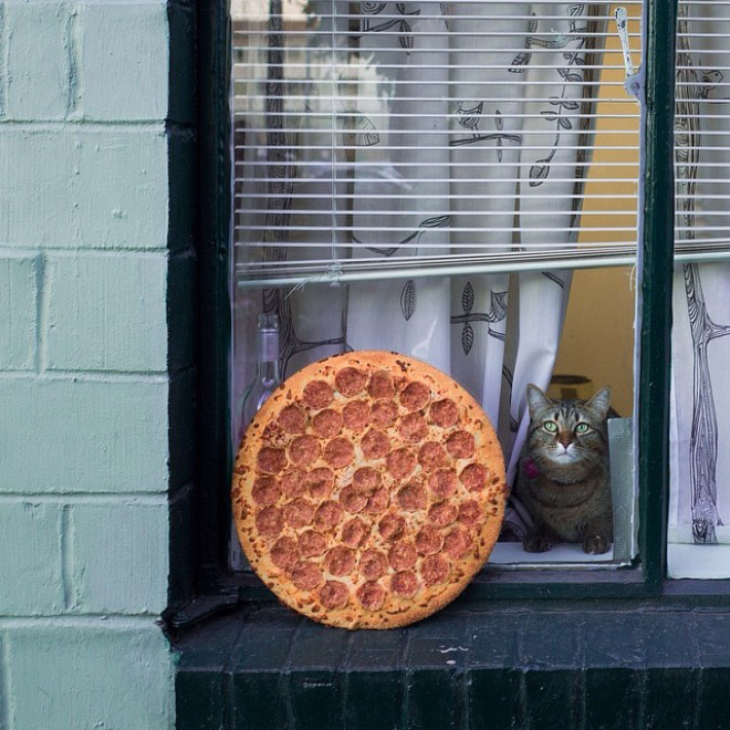 Cats and pizzas: two of my favorite things ever.