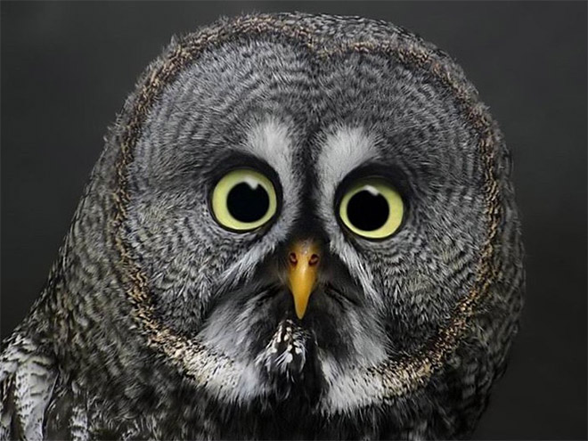 This owl is shocked about your poor life choices.