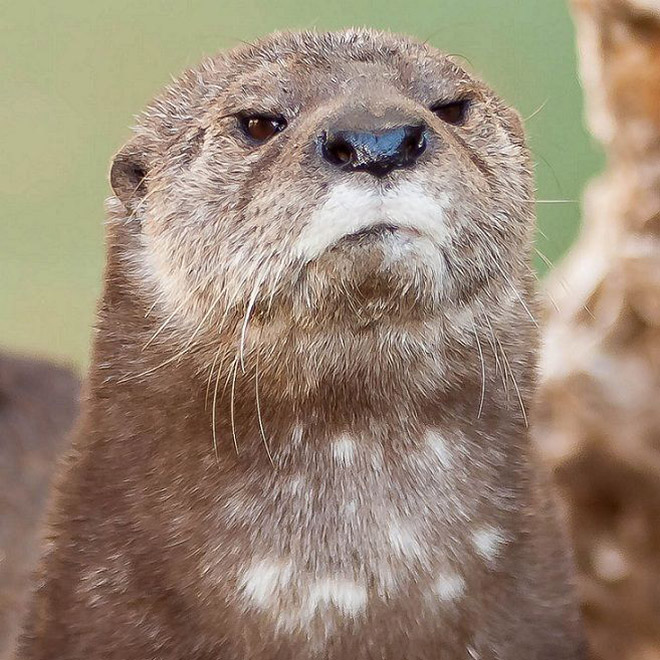 This otter is shocked about your poor life choices.
