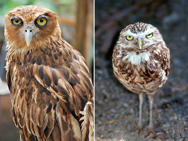 These owls are shocked about your poor life choices.