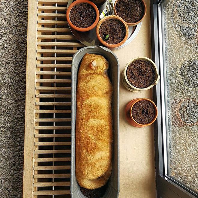 Cat plant among normal plants.