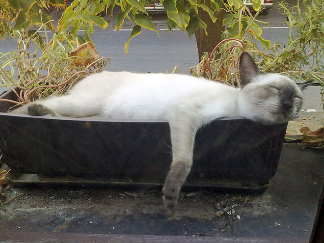 Really tired cat plant.