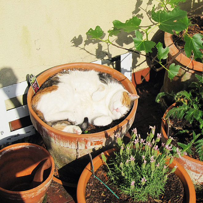 Warning: fat cat plants should never be watered!