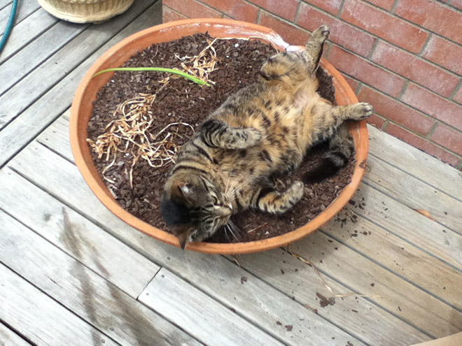 Beautiful fat cat plant.