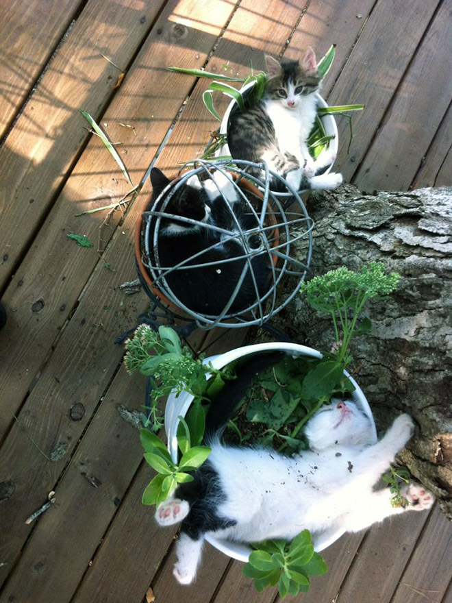 Kitten plants you should never water.