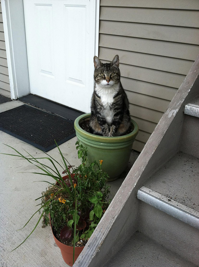 Please remember: you must never water a cat plant!