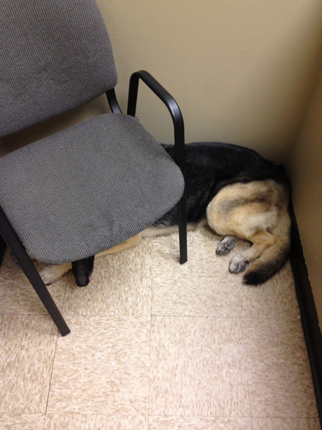 Poor dog at the vet.