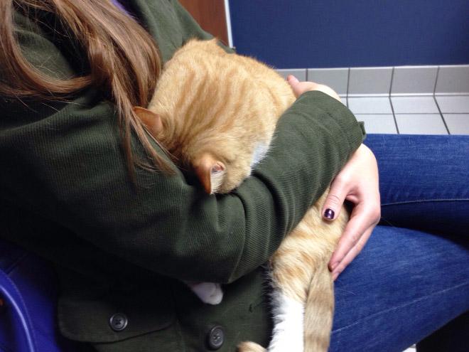 Poor cat hiding from the vet.