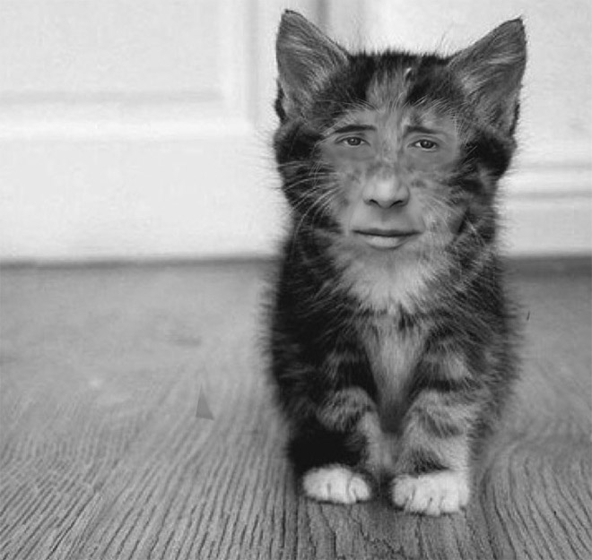 Meet Nicolas Catge: cat with Nicolas Cage's face.