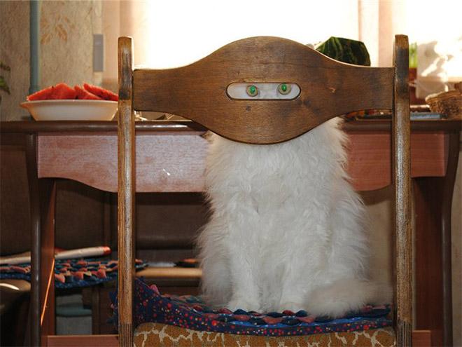 Cat ninja.