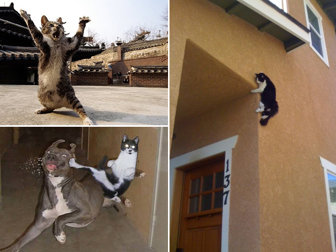 Ninja cats in action.