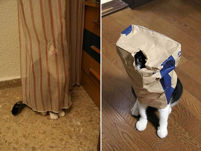 Ninja cat camouflage.