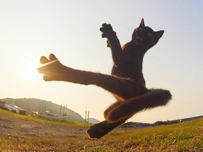Japanese ninja cat.