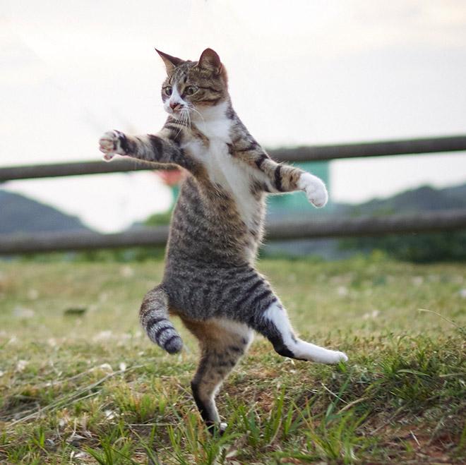Japanese ninja cat in training.