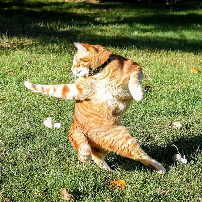 Ninja cat in practice.