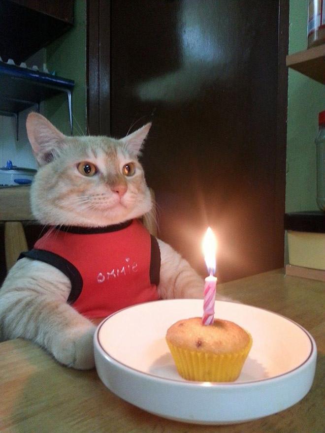 Cat celebrating his birthday.