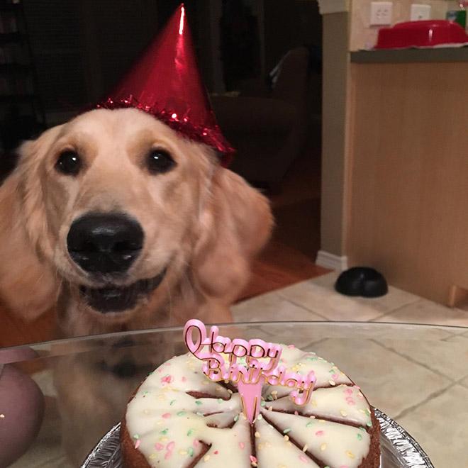 Dog having a birthday party.