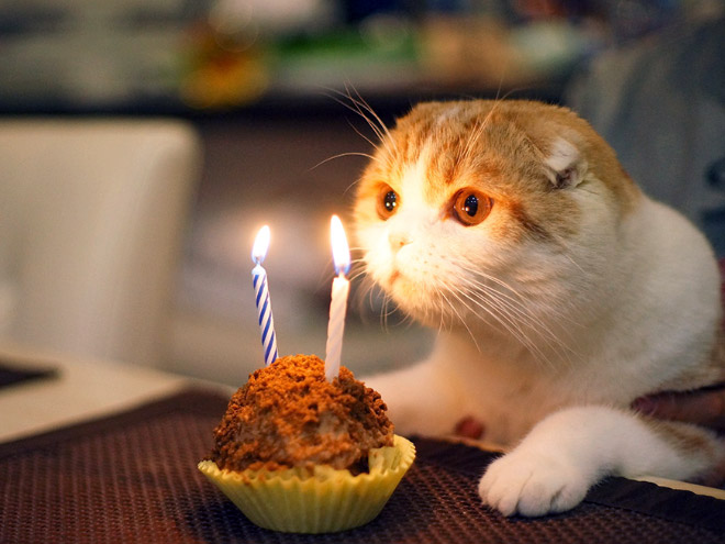 Cat having a birthday party.