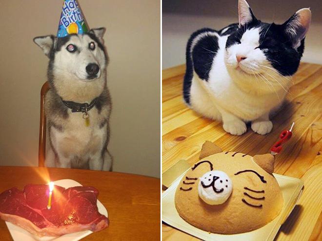Pets enjoying their birthday cakes.