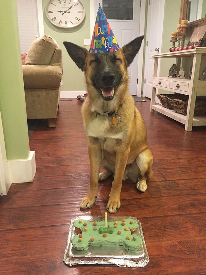 Dog celebrating his birthday.