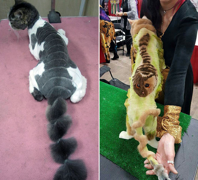 Has this cat grooming gone too far?