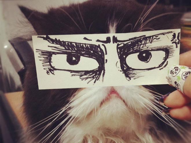 Cat with a cartoon eyes.