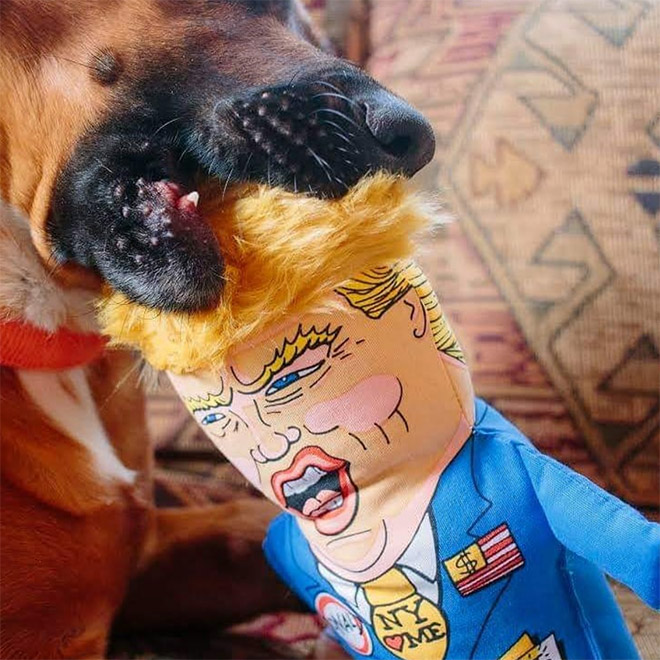 Dog enjoying a Donald Trump chew toy.