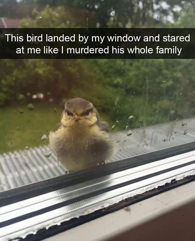 Funny bird snapchat.