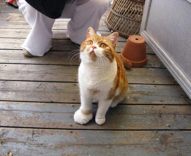 Cat vs. bee. The result.