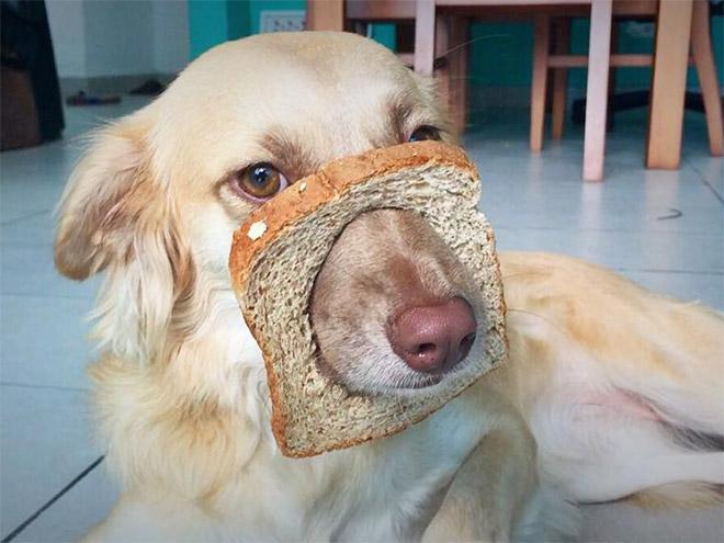 Dog breading.