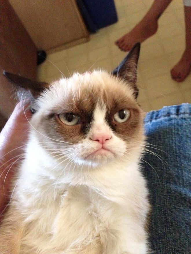 Grumpy cat.