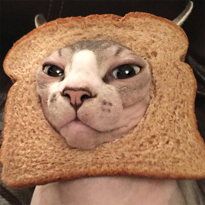 Cat breading.
