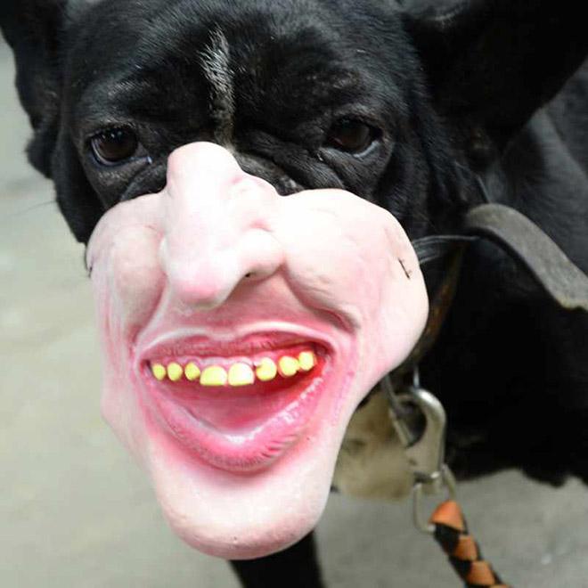 Creepy dog muzzle.
