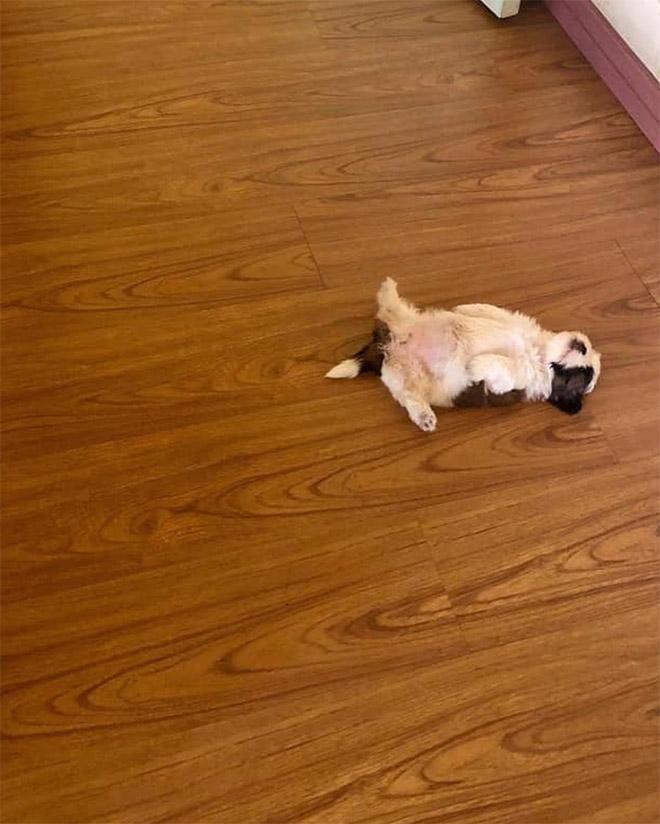 Cute sleeping puppy.