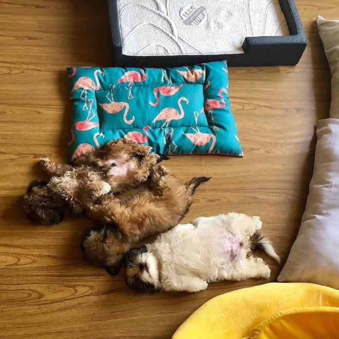 Adorable sleeping puppy.