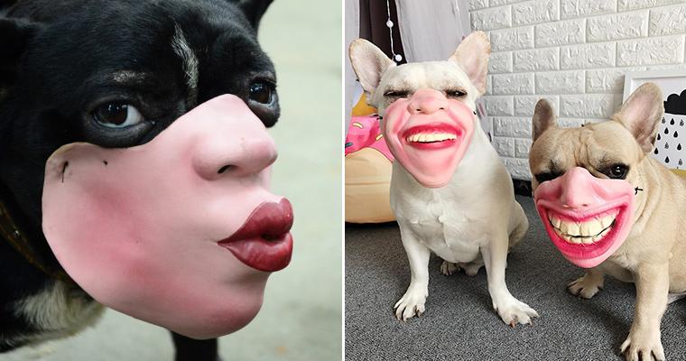 Human Face Masks The Creepiest Dog Muzzles Ever