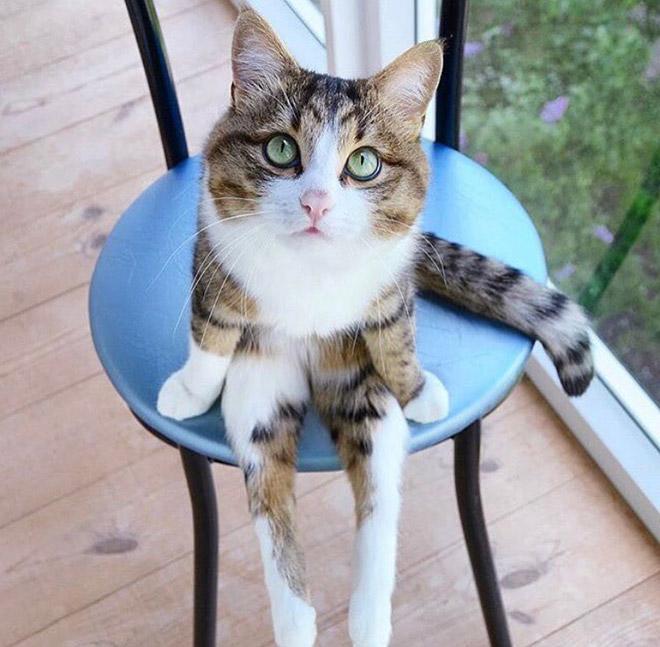Awkwardly sitting cat.