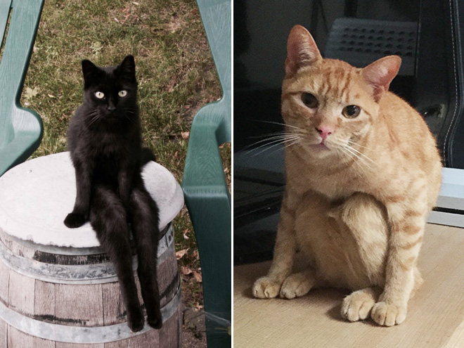 Awkwardly sitting cats.