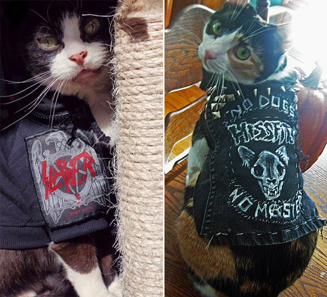 Awesome metal battle vest wearing cats.
