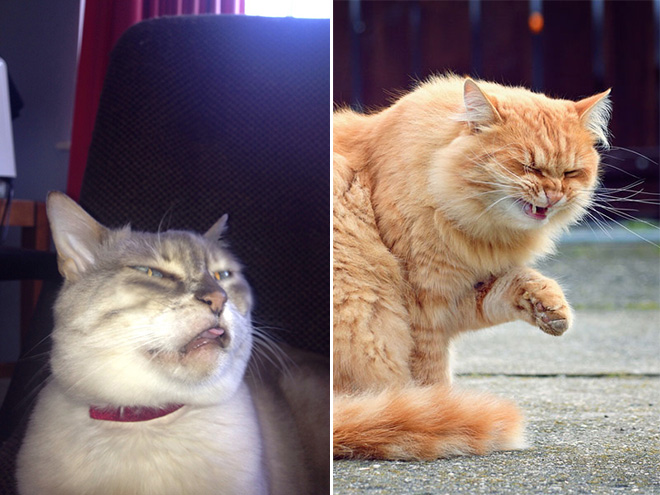 Cats caught mid-sneeze.