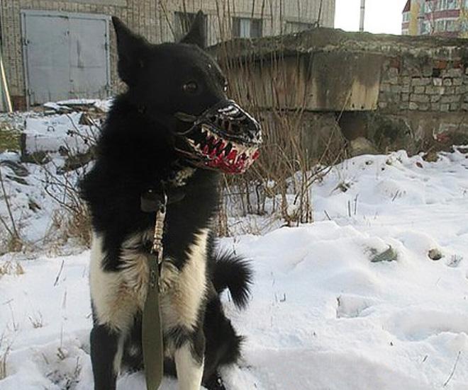 Werewolf dog muzzle.