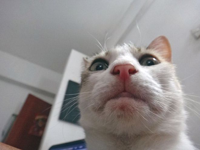 Cat with a double chin.