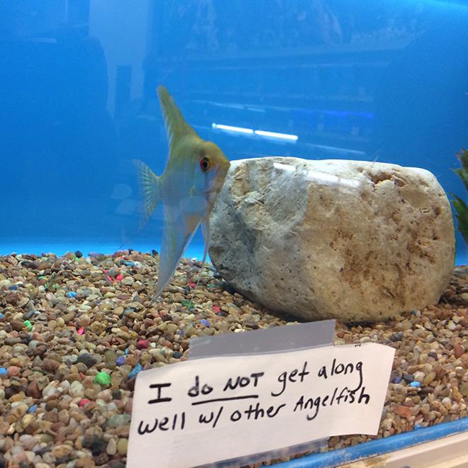 Fish shaming.
