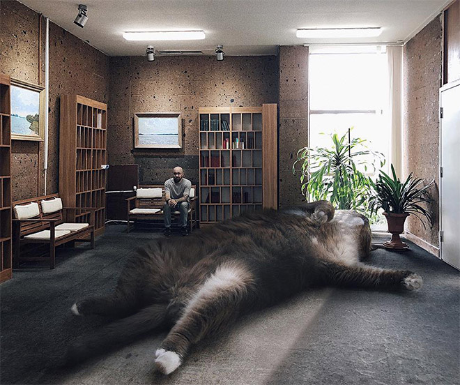 What if huge cats lived among us?