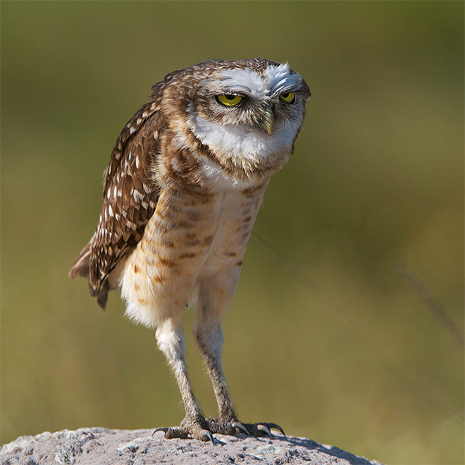 what do owls legs look like